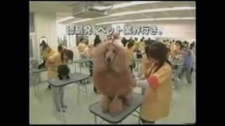 ブレーメン愛犬クリエイティブ専門学校コマーシャル