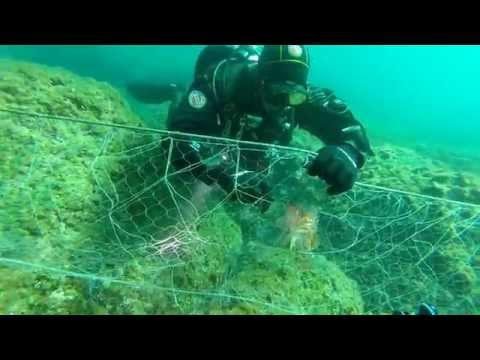 Ghost Diving: Rescue Of Entangled Scorpion Fish