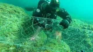 Ghost Fishing: Rescue of entangled Scorpion fish