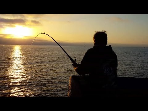 Fishing Imperial Beach Bat Ray 6/7/15 (Jeff)