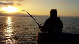 Fishing Imperial Beach Bat Ray 6/7/15 (Jeff)