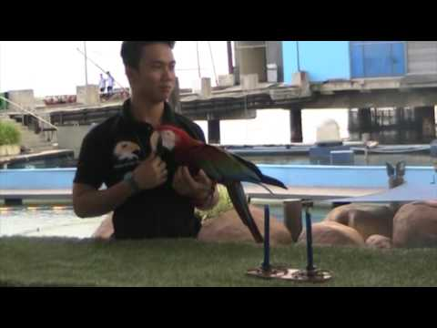 The All-Star Bird Show at Manila Ocean Park