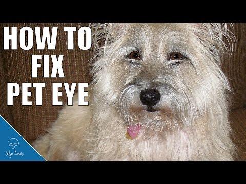 How To Fix Pet Eye: PHOTSHOP TUTORIAL #68