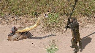LIVE: Snake vs Porcupine, Elephants & Crocodiles - Real Fight attacks - Wild Discovery Animals thumbnail