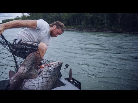 Giant 60 Pound King Salmon Almost Knocks Guy in Water