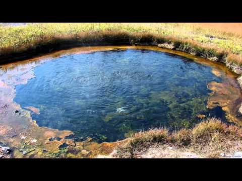 Hot Spring Bubbling Sound at Yellowstone National Park (w/bird and insect sounds in background)