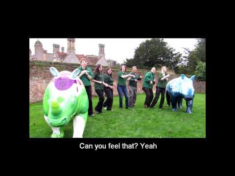 Go! Rhinos Vs Price Tag (Marwell Zoo Staff Go Wild)