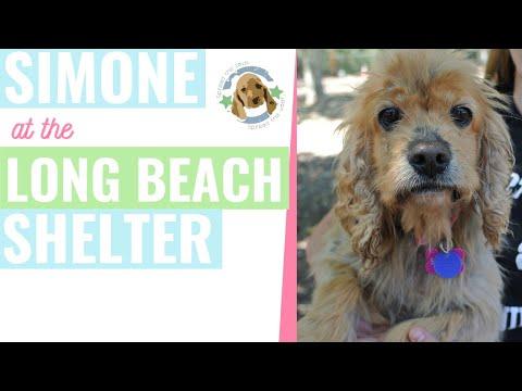 Simone at Long Beach shelter
