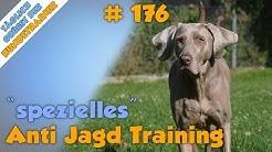 TGH 176 : spezielles Anti Jagd Training für Hunde - Hundetraining Hundeschule Stadtfelle