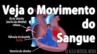 No corpo sanguínea como fazer a circulação