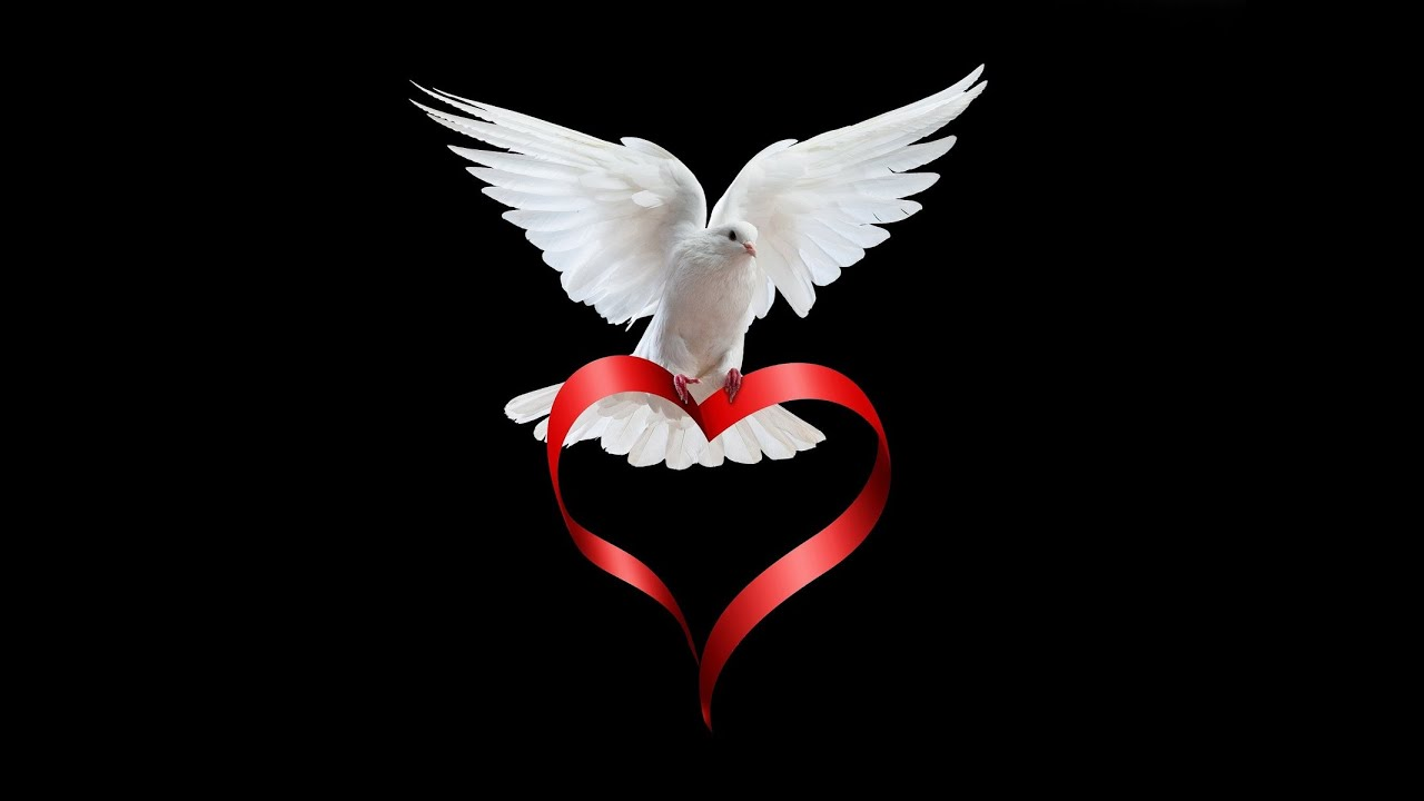 Resultado de imagen de paloma blanca
