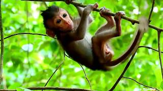 OMG ! Very Small Baby Monkey Waiting Mother Down From The Tree, Poor New Baby Monkey Cry Call Mom