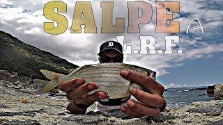Salpe e non solo a LIGHT ROCK FISHING