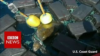 Sea turtle found tangled in floating cocaine bales - BBC News