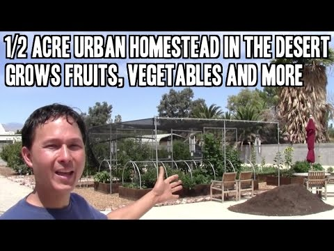 1/2 Acre Urban Homestead in the Desert Grows Fruits, Vegetab