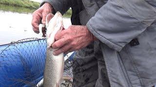 Риболовля на Півночі. Осінній хід щуки на річці Канда.