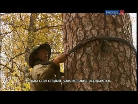 Бортевой мёд из Республики Башкортостан - YouTube
