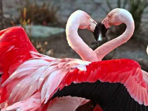 I LOVE YOU - Celine Dion (Lyrics)