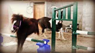 putting-our-horses-together-and-willow-jumps-day-044-02-13-19