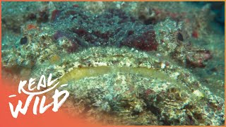 Can Venomous Sea Snakes Help Us Find Miracle Cures? | The Blue Realm | Real Wild Documentary