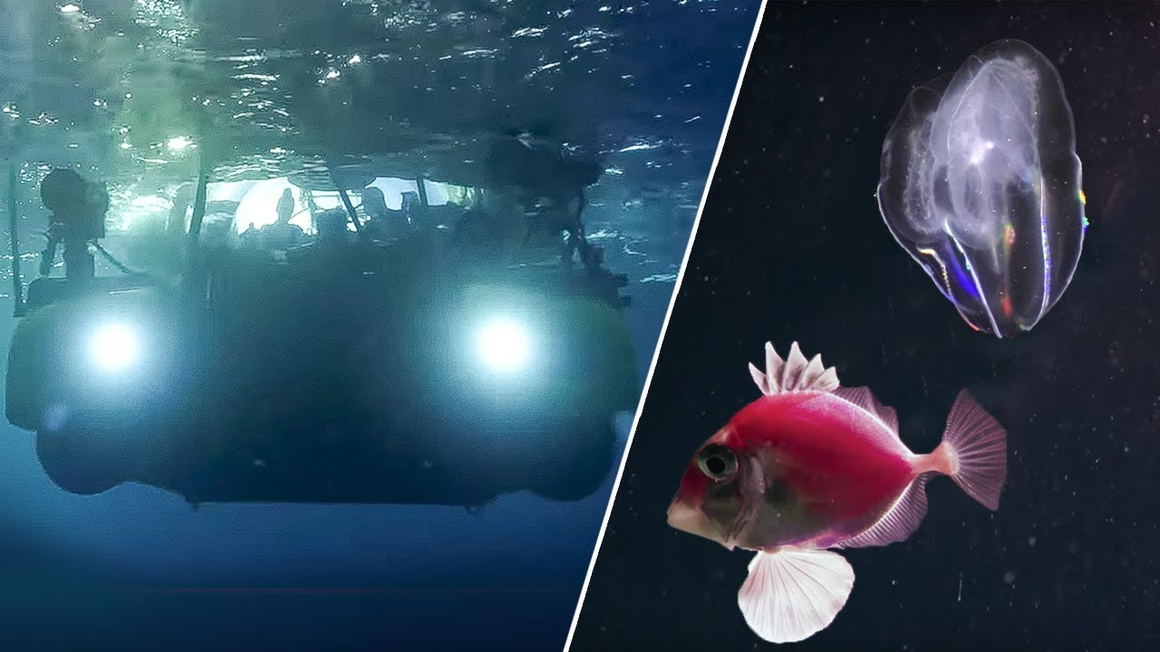 The Amazing Underwater Cinematography of Blue Planet II | Our Blue Planet | Earth Unplugged