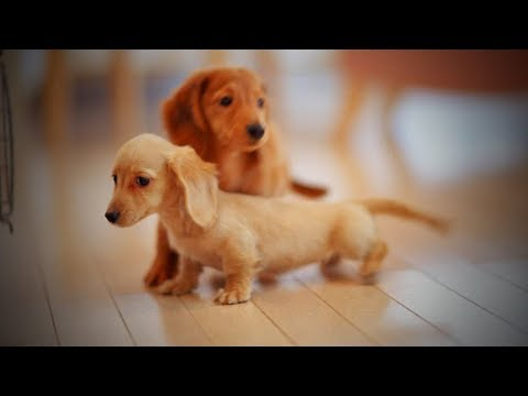 Cute Puppies 😂🐶 Funny and Cute Little Dogs (Part 2) [Funny Pets]