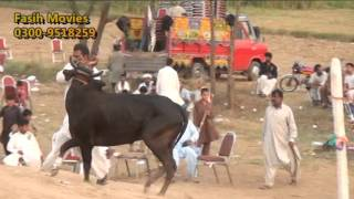 Akhara Jhanghir 20-09-2015 ladi group part 17