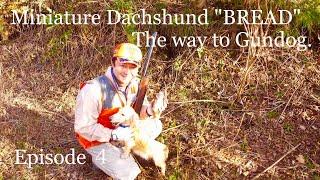 ミニチュアダックスフンドのブレッドが狩猟犬として猟野でデビューしま...