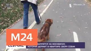 Соседи жалуются на москвичку, которая держит в своей квартире стаю собак - Москва 24