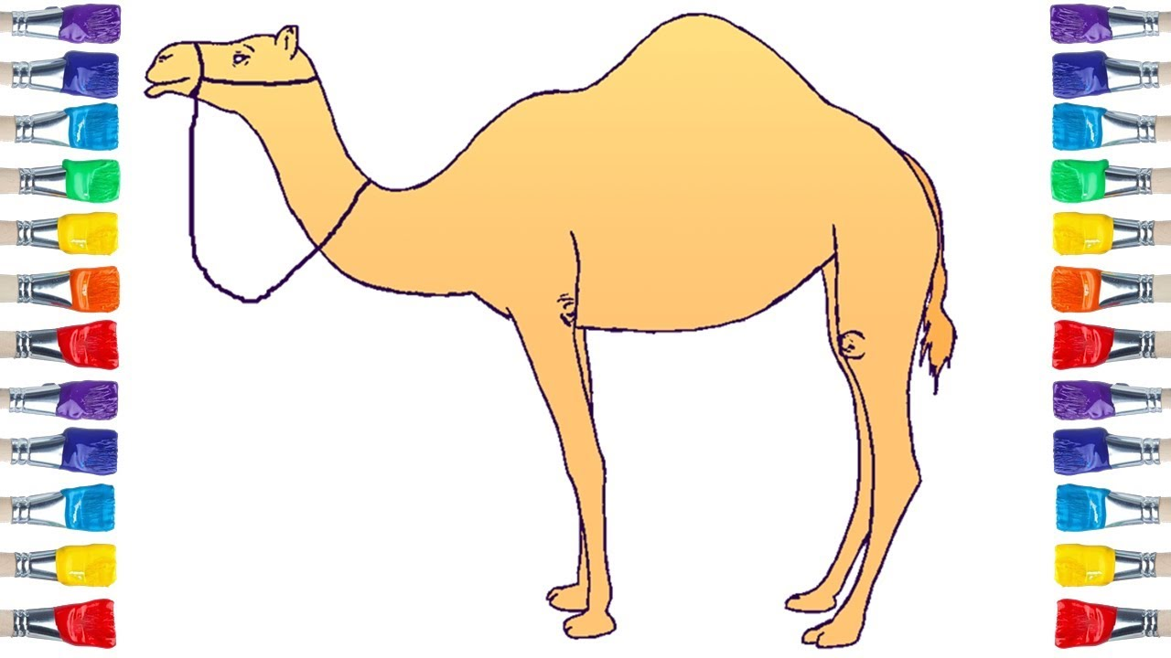 How to Draw a Camel 💖 Drawing and Coloring Pages for Kids