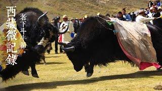 《西藏微记录》—  者下斗牛节 | CCTV
