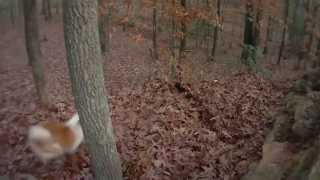 Собаки играют в листве. Подборка Топ 7
