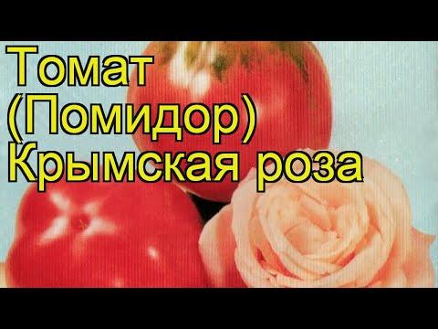 Томат обыкновенный Крымская роза. Краткий обзор, описание характеристик, где купить рассада, семена
