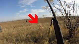Первый фазан охота в Херсоне