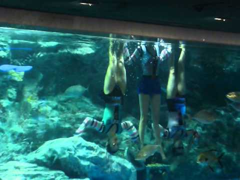 3 Lovely Korean Under Water Swimming performers in Seoul South Korea