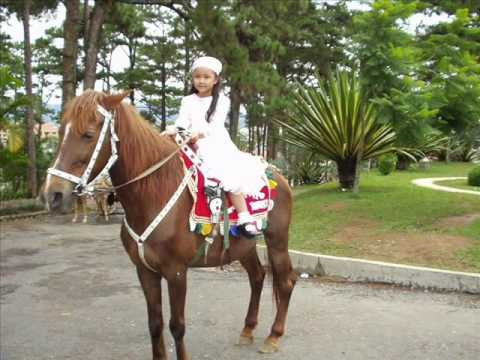 CƯỠI NGỰA (RIDING HORSES)