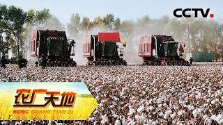 《农广天地》 棉花机械化生产技术 20180620   CCTV农业