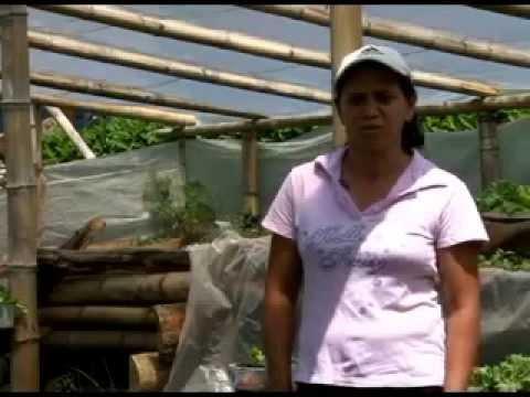 Producción de Hortalizas en ambientes protegidos rústicos