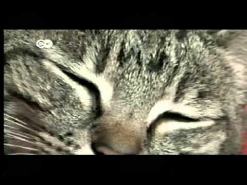 Deutsche Welle - El sueño