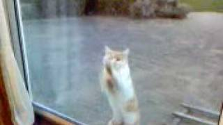 'Gollum' the cat!