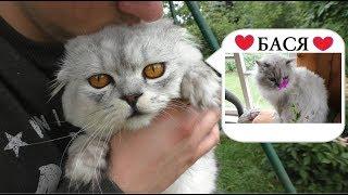 Новое свидание кота Кевина | в гостях у Баси и Лолы