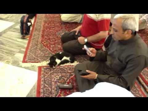 Cat in Makka Mukarrma latest video 14 march 2012