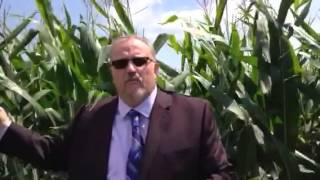 """Cornfields Of Indiana"""