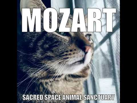 Mozart- Sacred Space Animal Sanctuary and Rescue