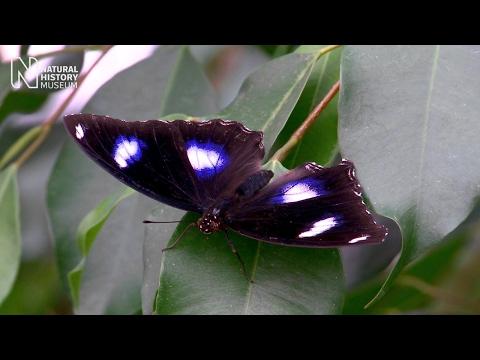 Sensational Butterflies 2017   Natural History Museum
