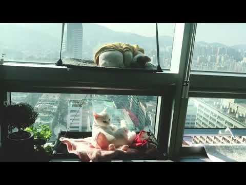 🐾 창문지기 고양이 일광욕