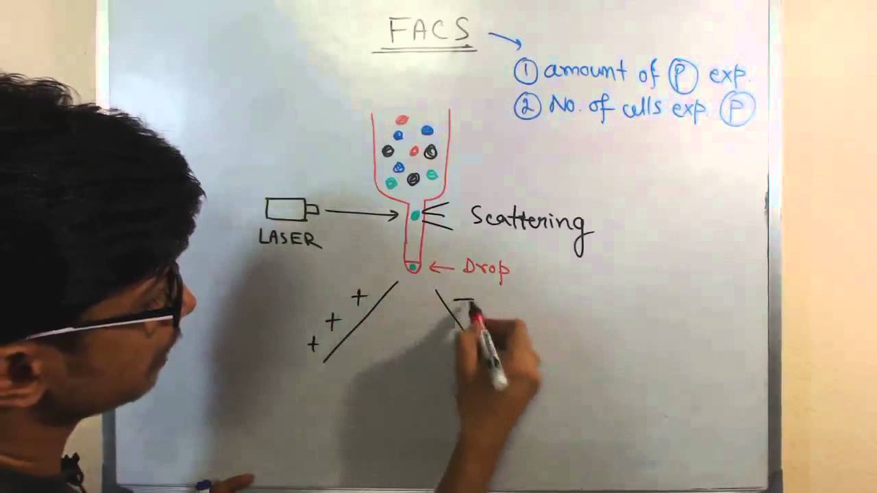 Fluorescence activated cell sorting (FACS)