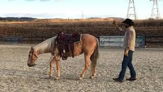 Backing Up Offline | Chris Shalliev | Horsemanship | Horsenook