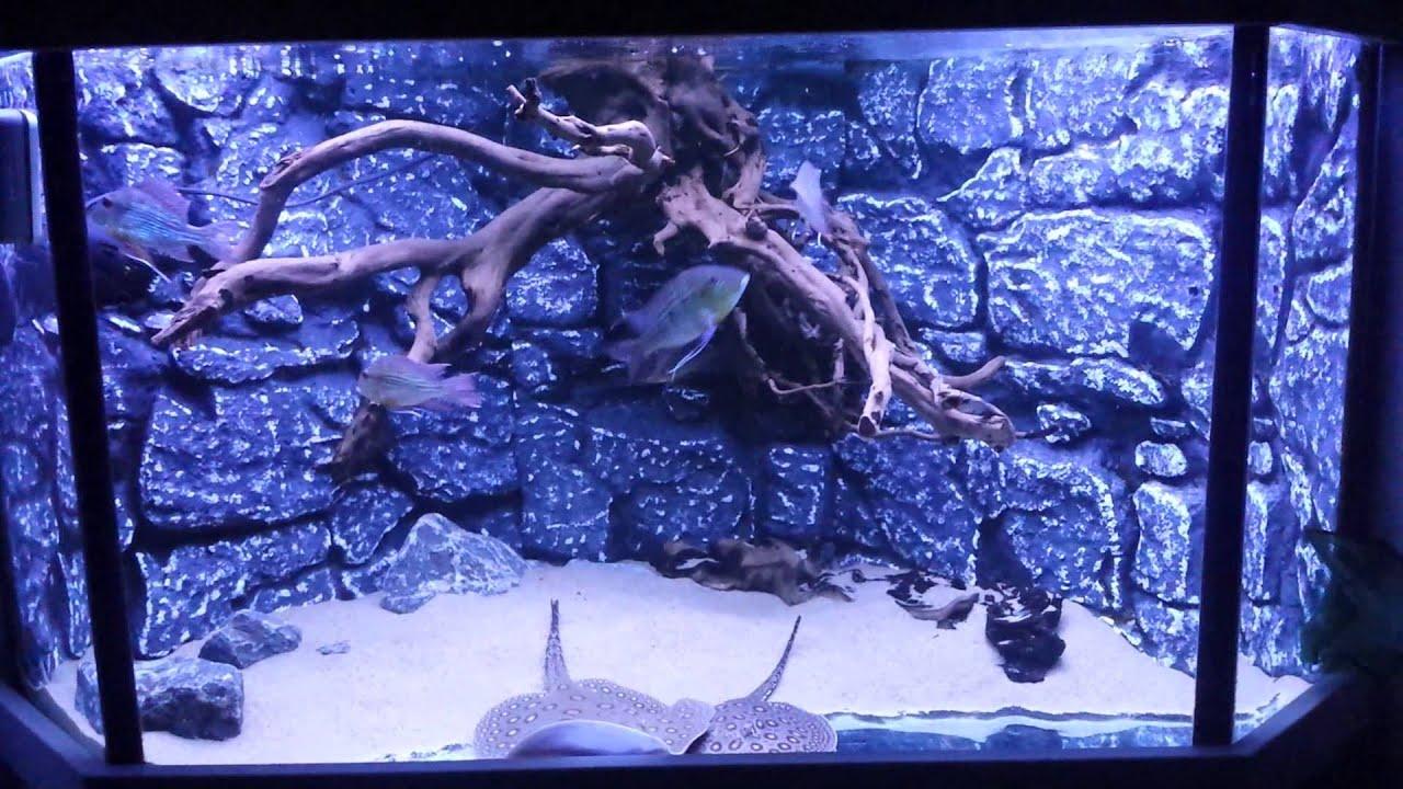 led verlichting aquarium met roggen youtube. Black Bedroom Furniture Sets. Home Design Ideas
