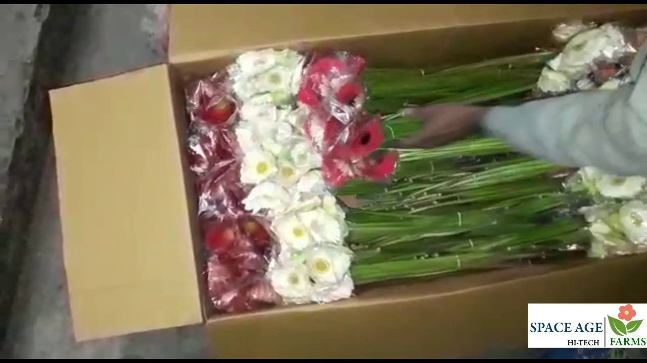 How to pack flowers